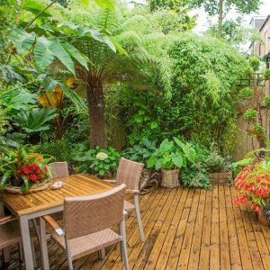 giardino jungle