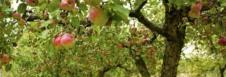 consigli potatura alberi da giardino