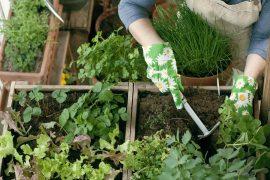 come costruire un orto rialzato fai da te