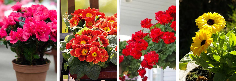 fiori decorazione balcone primavera