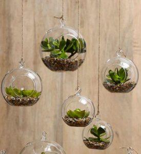 piante grasse vetro decorative