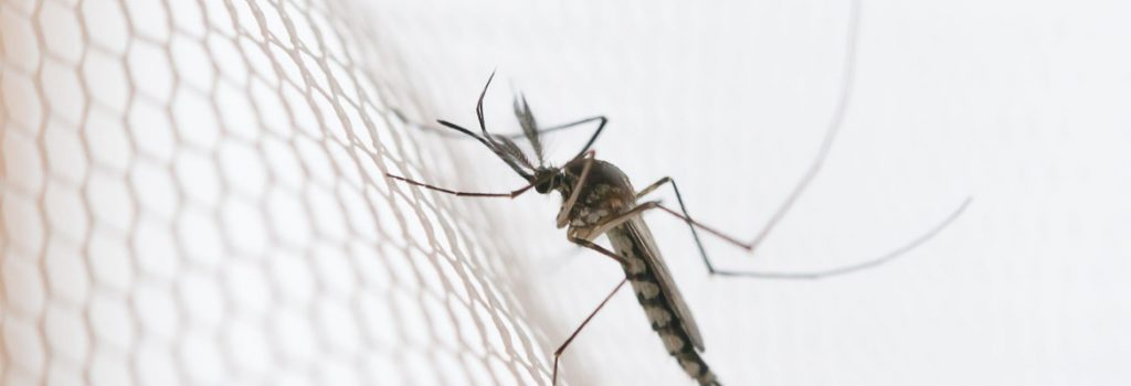 come tenere lontane le zanzare